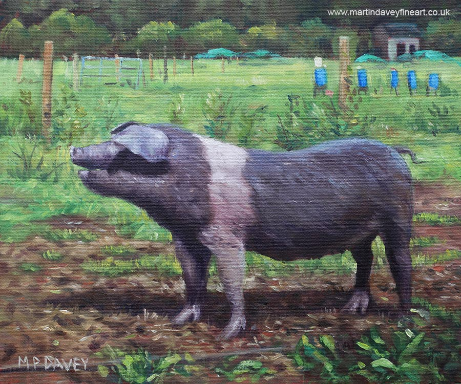 black_and_white_pig_on_farm oil painting